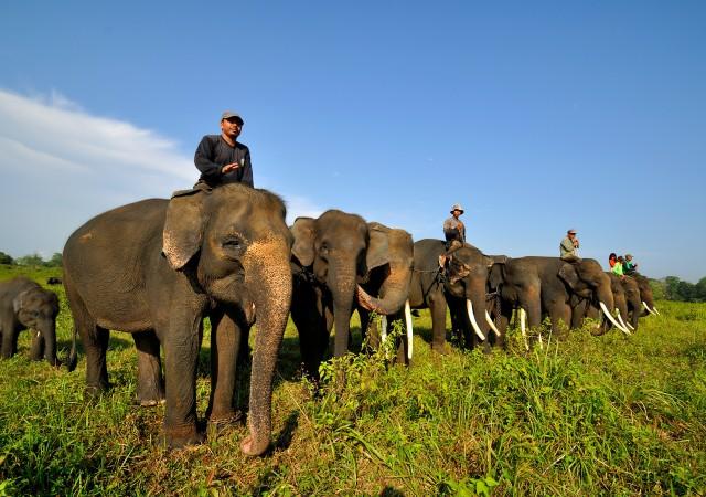 Wisata Lampung Taman Nasional Way Kambas
