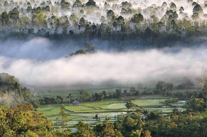 Wisata Sulawesi Tengah Cagar Alam Morowali