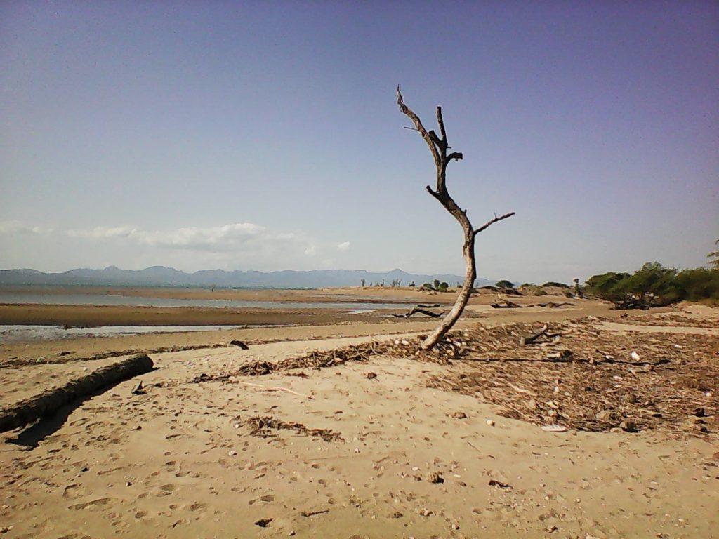 Wisata Kupang NTT Pantai Kelapa Tinggi