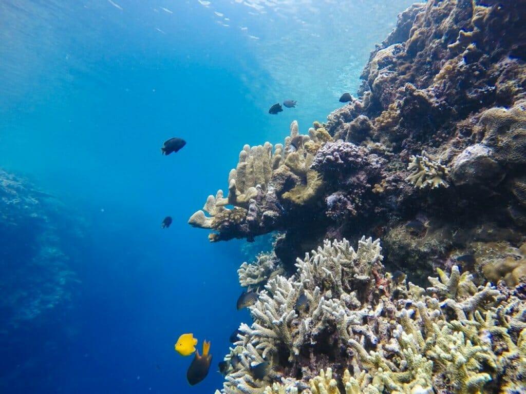 Wisata Gorontalo Taman Laut Olele