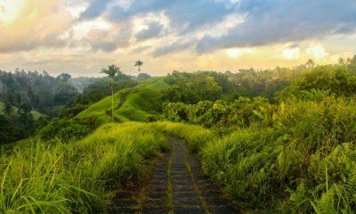 Wisata Bukit Campuhan Bali