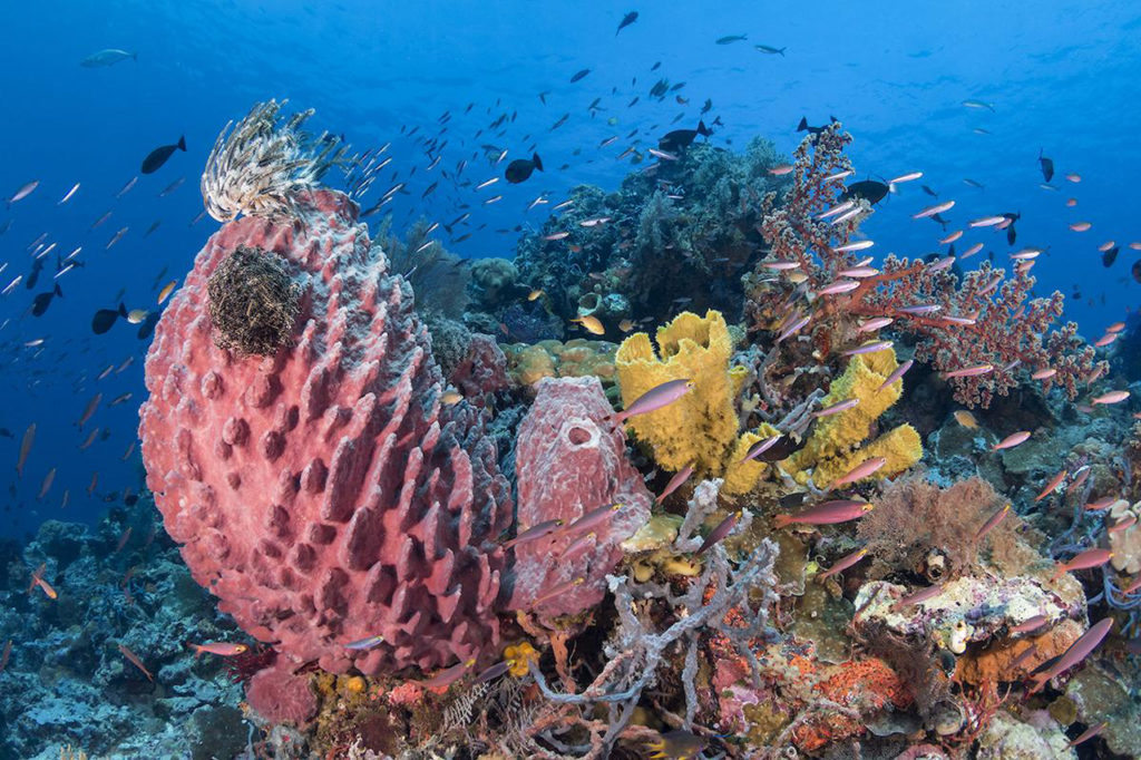 Taman Nasional Wakatobi, photo by scubadivermag